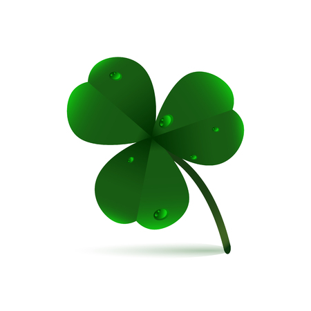 Spring green plant fhree-leafed clover with dew, raindrops or waterdrops on white background. St. Patricks day,, Saint, Patrick, holiday, nature, good luck, flower, leaf, eco ecology fresh object