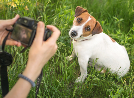 Young woman photographer taking a photo of sitting small dog jack russel terrier outside in green summer park in grass at sunny day. Female hands holding a camera Stock Photo