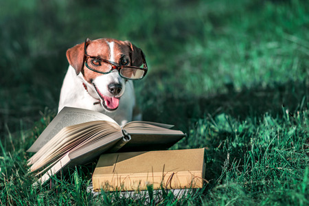 Cute pet jack russel terrier with eyeglasses sitting outside on green grass next to an open book. Dog reading in park at sunny day. Education and training. Copy-space left.
