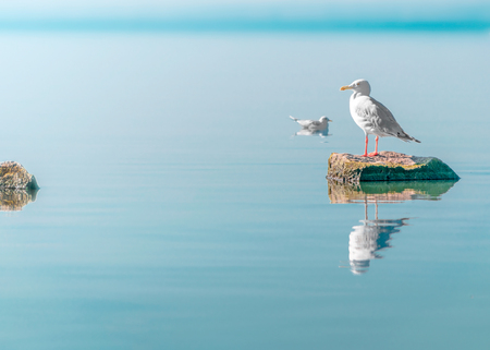 Single white seagull bird sitting on stone on sea with specular reflection in water. Beautiful natural horizontal background.