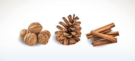 Walnuts, pine cone and cinnamon. Christmas and New Year deror. Isolated objects. Realistic Vector illustration on white background.