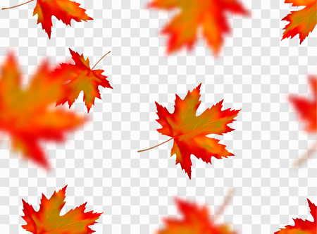 Seamless pattern with bright orange yellow red blurred falling maple leaves isolated on transparent background. Seasonal banner, cover, wallpaper or autumn holiday vintage decor. Vector illustration.