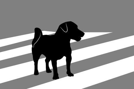 Silhouette des kleinen Hundes Jack Russell Terrier, der die Stadtstraße auf einem Zebrastreifen überquert. Vektorgrafik