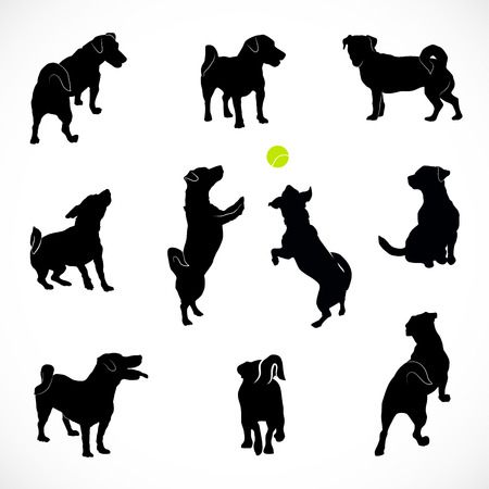 Set of Silhouettes of small active and calm dog Jack Russell Terrier. Rear, top and front view of the pet isolated on white background. Illustration
