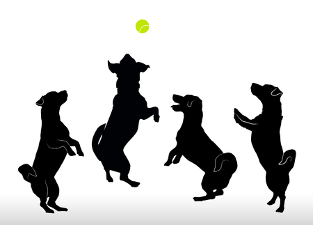 Silhouette set of four small happy dogs Jack Russell Terrier standing on hind legs, jumpimg playing with ball or asking something. Vector illustration in black color isolated on white background. Ilustração