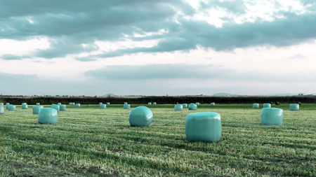 Agricultural work in a field at sunset. Equipment for forage. Film wrapping system. Round bales of feed for farm animals. 版權商用圖片