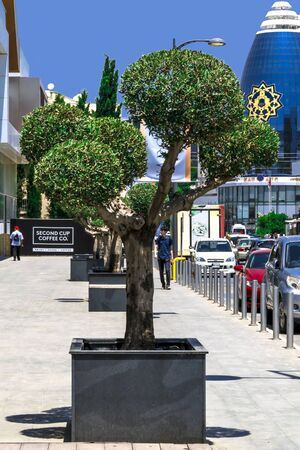CYPRUS, NICOSIA - JUNE 10, 2019: City street with office American University of Cyprus AUC . Northern Cyprus. Flowerbed with a round cut tree Éditoriale