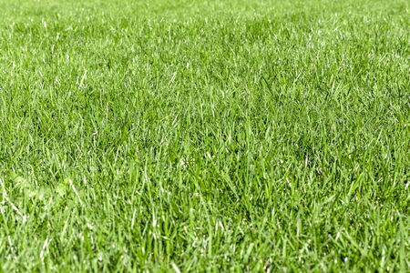 Trimmed thick green grassy lawn background. Top view and side view. Focus on the center. Фото со стока