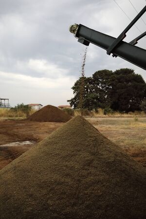 The process of producing olive oil in a modern oil mill in Northern Cyprus. Waste production the dry fragmented seeds.