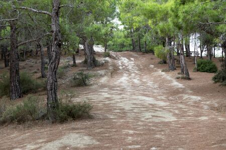 Northern Cyprus landscape. Beautiful mediterranean nature. Mountain road. Forest.