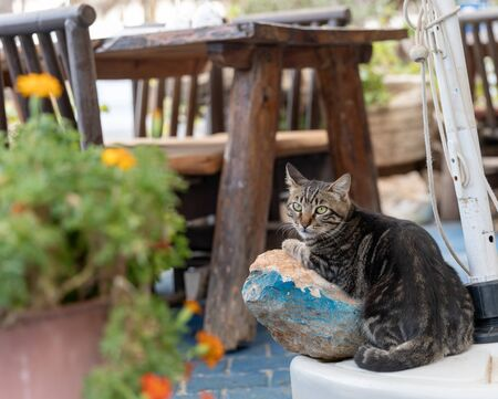 Portrait of cute gray white cat lying on stone under table in outdoor mediterranean restaurant and looking into the camera