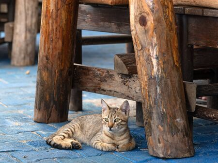 Portrait of cute gray white cat lying under table in outdoor mediterranean restaurant and looking into the camera