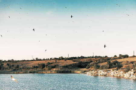 Beautiful landscape river and flock of flying birds.
