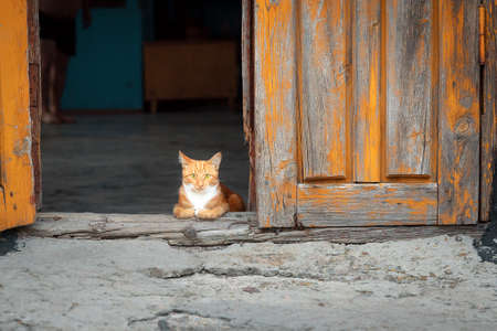 Portrait of small cute ginger kitten sitting quietly in the doorway of an old house and looking at the camera