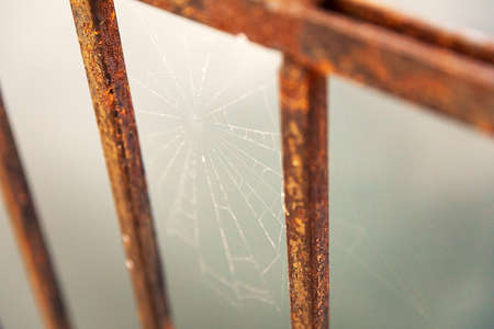 Spider web on rusty metal fence background.