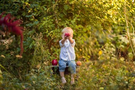 Cute little barefooted blond boy in white summer shirt and jeans playing with apples in the garden. Copy space. Stok Fotoğraf