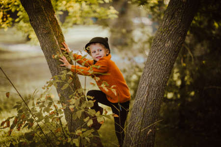 Little cute girl in red autumn sweater climbing the tree. 스톡 콘텐츠 - 151216788