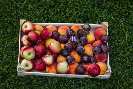 Wooden basket with bunch of apples, peaches and plums on the grass.