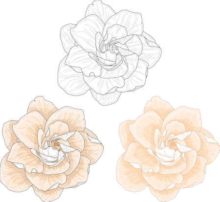 Realistic gardenia flower template set in pastel cream color and black and white. Jessamine vector illustration for games, background, pattern, decor. Print for textile, fabrics and other surfaces. Co