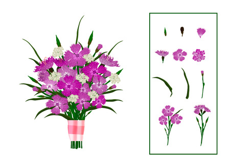 Vector illustration of bouquet of carnations, decorated with satin ribbon, with flower elements. Isolated on white background. Stock Illustratie