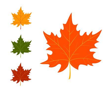 Set of autumn leaves on white background. Vector illustration