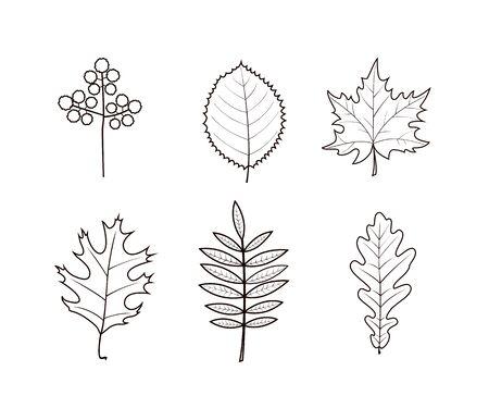 Autumn leaves line art design on white background. Vector illustration