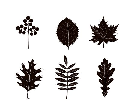 Autumn leaves silhouettes isolated on white background. Vector illustration