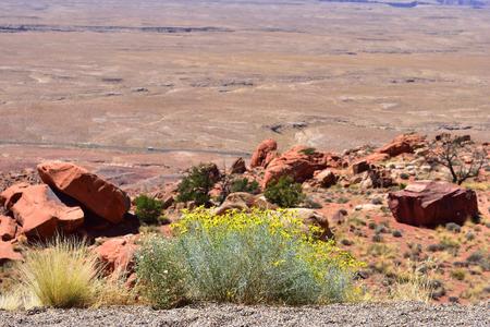 flowers in desert