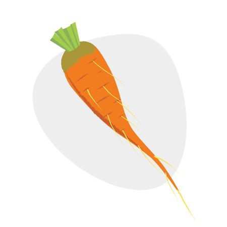 Vegetable. Carrot Vector illustration Eps 1 0