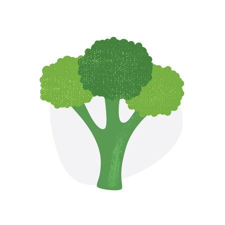 Broccoli isolated on white background. Vector illustration. Eps10