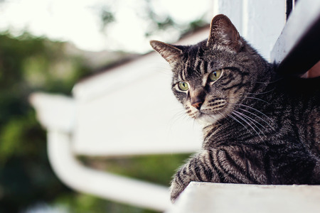 nine years old: male tabby cat laying on balcony ledge