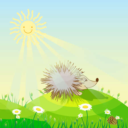 green day baby blue background: Hedgehog on a sunny meadow sunshine daisies bloom