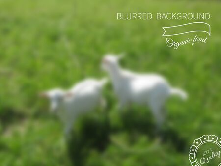 grazed: Vector image blur.Goats grazed on grass.Advertising healthy lifestyle,template Illustration
