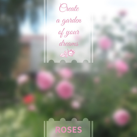 smeared: Blurred background of flowering roses with ribbon for your text