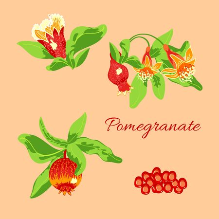 Set of tree branch with blossoming pomegranate fruits isolated on peach background