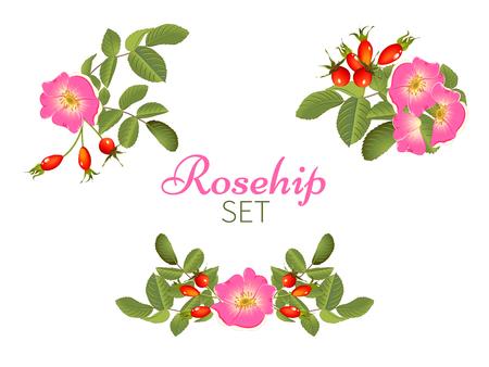 herbal tea rosehip Ilustração