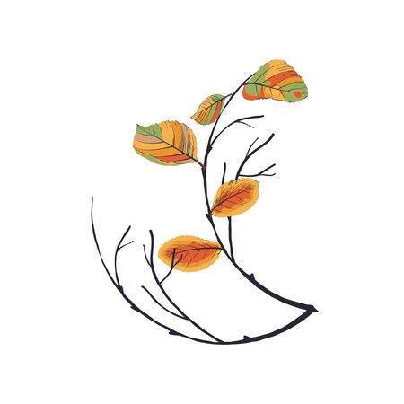 floral: Composition of autumn leaves and twigs