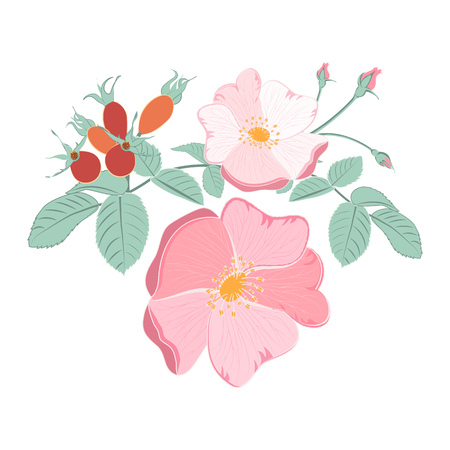 Bouquet of rosehip Vector illustration.
