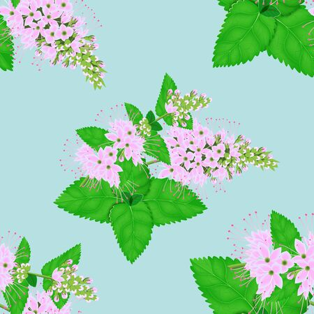 Seamless pattern of mint leaves. Illustration