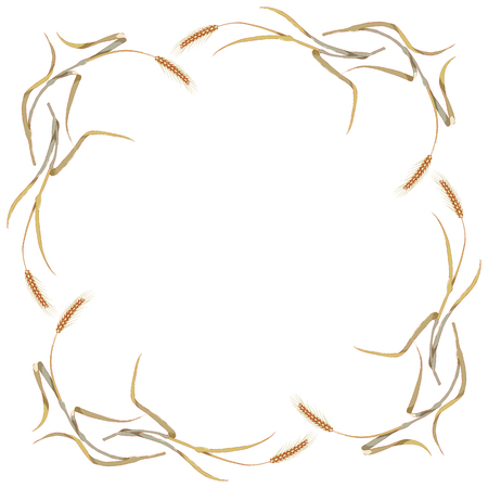 Frame of hand drawn rye or spikelets of wheat around on white background.Wheat ear,organic grain.