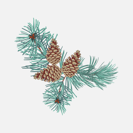 Arrangements of coniferous twigs with pine cone on white background,close up. Illusztráció