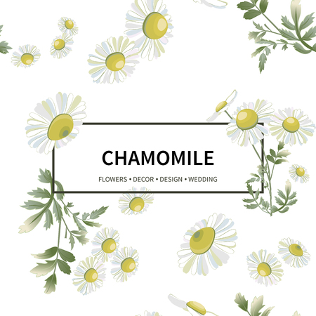 Many daisies scattered randomly isolated on white background. Chamomiles flower hand drawn drawing. Vector floral illustration. Wild botanical garden bloom.