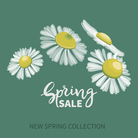 Spring SALE,hand written lettering. Banner with bouquet of daisies on a blue background.Vector illustration