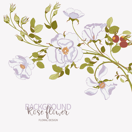 Floral branch of beautiful white wild rose with rose hips on white background, close-up. Vector illustration Illusztráció