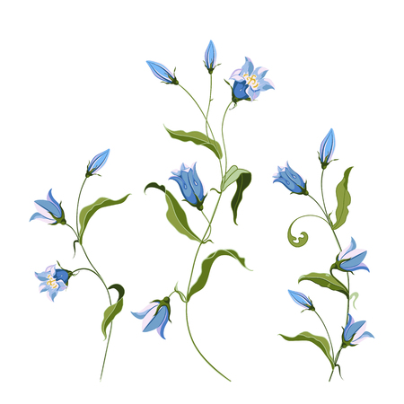 Collection of hand drawn blue bell flower, composition