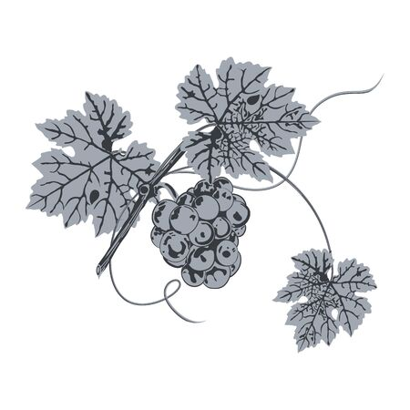 Silhouette of bunch of grapes and leaves close up, blue on white background.