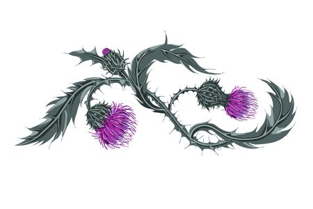 Hand drawn composition of a thistle flower. Milk Thistle isolated on white.