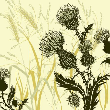 Silhouette of thistle on background meadow plants and cereals. Floral composition with wild flowers. Vector botanical illustration.