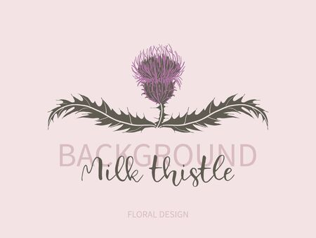 Arrangement of milk Thistle flower with leaves on pink background. Symbol of Scotland, logo. Vettoriali