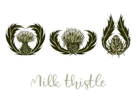 Set of arrangements of milk Thistle flowers, buds, spiny stems, green leaves on white background.